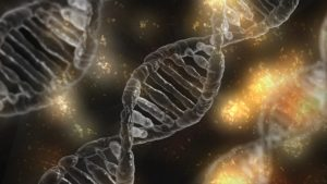 DNA tests to predict muscle